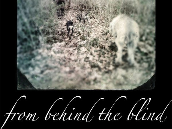 From Behind The Blind by Robert Murphy